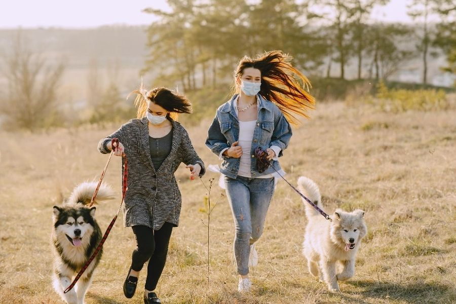 Pet Services and Dog Walking during COVID-19