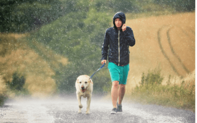 Hurricane Preparedness for Pets in Broward County, Florida