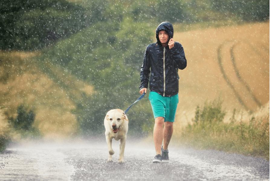 Hurricane Preparedness for Pets in Broward County, Florida