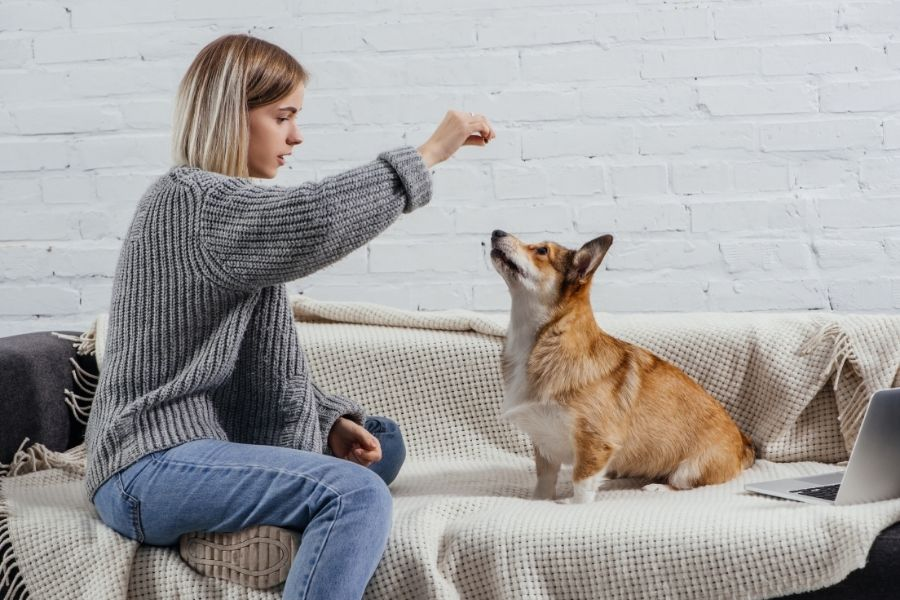 5 Points to consider when dog training