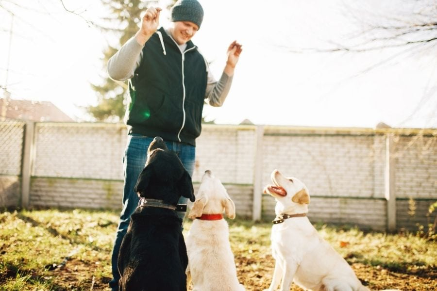 Points to consider when dog training