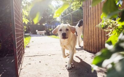 Top 5 Places for Dog Walking in Broward County