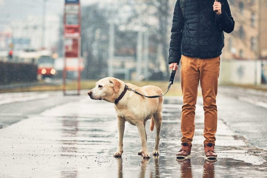 5 Things to Look Out for When Walking Your Dog
