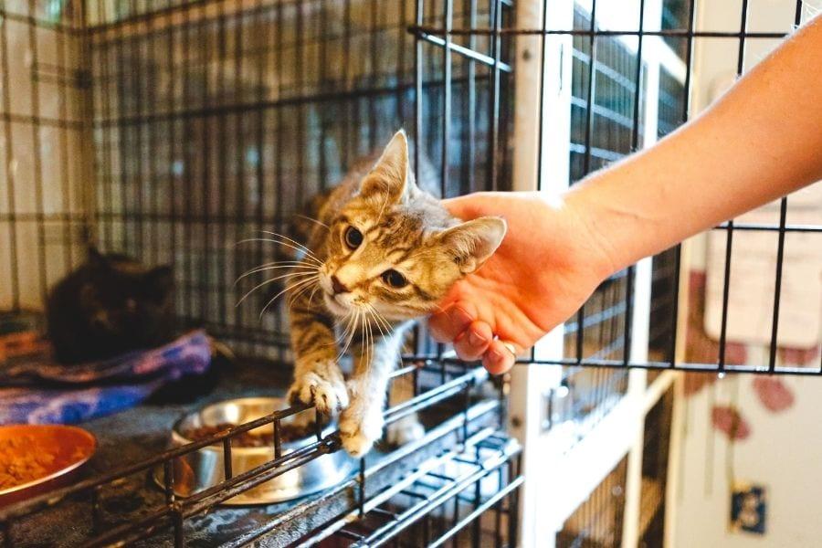 National Pet Preparedness Month
