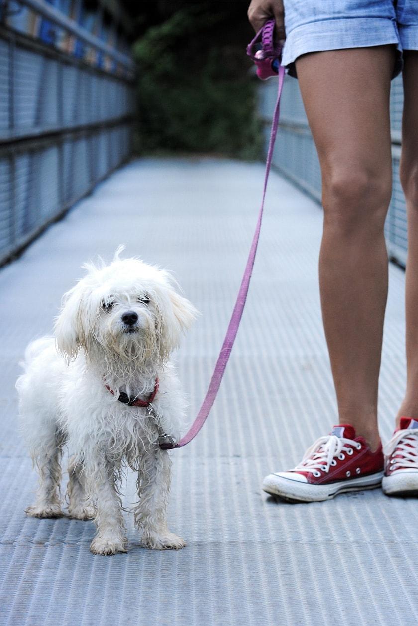 Employment Dog Walker Pet Sitter Fort Lauderdale